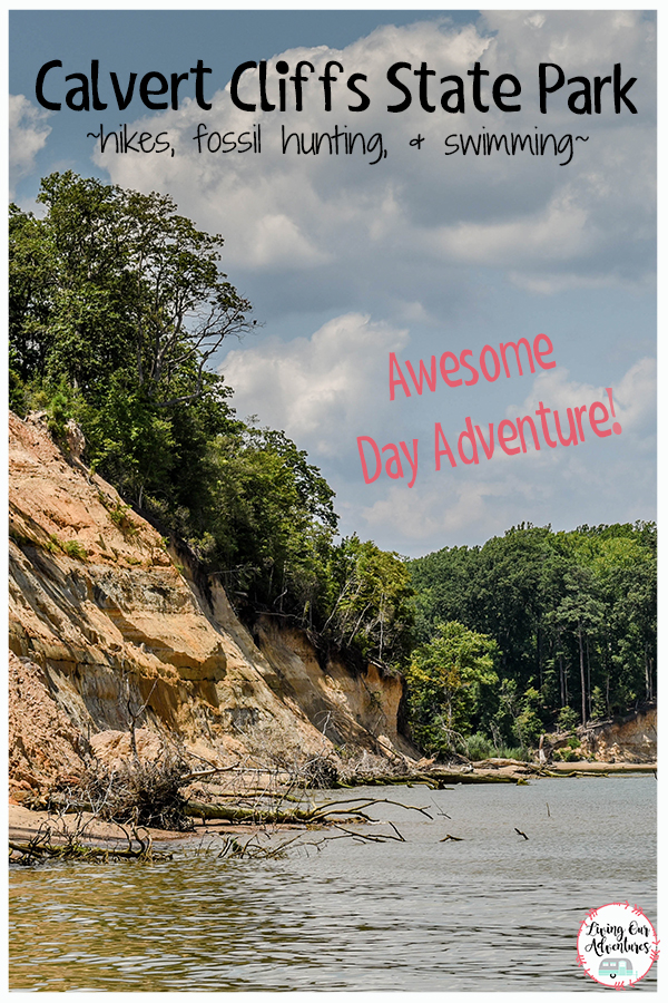 Calvert Cliffs State Park, a great Day Adventure to take with your family