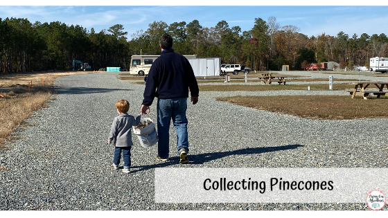 collecting pinecones