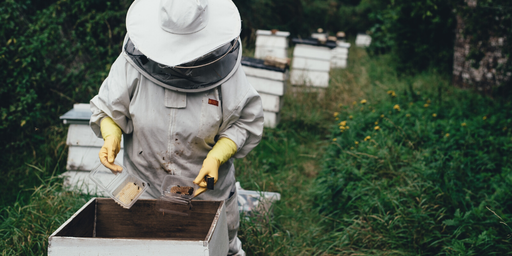 Become a Bee Keeper